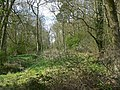 Woodwell Head Wood - geograph.org.uk - 781540.jpg