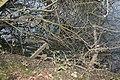 Wrecked jetty - geograph.org.uk - 1112249.jpg