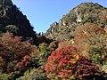 Yabakeimachi Oaza Shinyaba, Nakatsu, Oita Prefecture 871-0422, Japan - panoramio (7).jpg