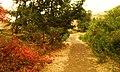 Yakima Greenway - panoramio (15).jpg