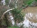 Yarra River at Bulleen1.JPG