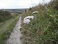 Yarrow - Achillea millefolium - geograph.org.uk - 1530754.jpg