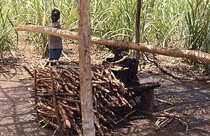 Agriculture in Liberia - Young boy grinding sugar cane near Flumpa, Nimba County, 1968.