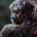 Zürich Zoo DSC 6812-24 (16272274741).jpg