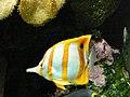 Zoo Wuppertal 2007-04-30 (000116).jpg