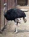 Zoopark Baku 086.jpg
