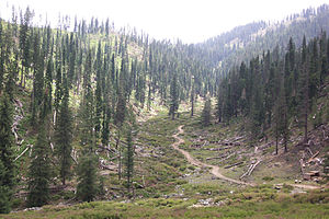 Korangal Valley - Illegal tree chopping by timber mafia in the Korengal Valley (2003)