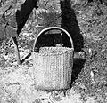 """""""Cajna"""" (košara) za češnje obirat, Dolenja vas, pri Černivci 1949 (2).jpg"""