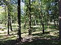 Łask, Park Miejski-007.JPG
