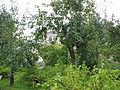 Аптекарский сад с огородами 02.JPG