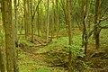 Бритавський ліс 02.jpg