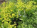 Донецкий ботанический сад 015.jpg
