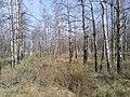 Заброшенный дачный посёлок - panoramio (23).jpg