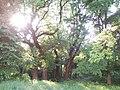 Митки Барський район Парк у маєтку адмірала Чихачова.jpg