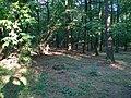 Окрестности Вильного - panoramio (2).jpg