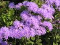 Растения в Седово 249.jpg