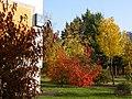 Центр образования 1493 - осень раскрасила куст - panoramio.jpg