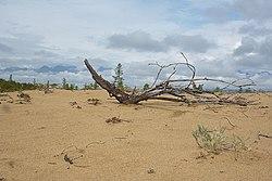 Чарские пески 1.jpg