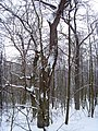 Чернечий Ліс 20.jpg
