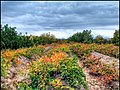 دیدنیهای پاییز مراغه - panoramio (10).jpg