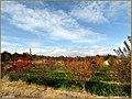 طبیعت پاییزی روستای میمونق - panoramio (1).jpg