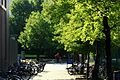 台大校園 - panoramio.jpg