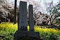 大藪のひがん桜(ひょうたん桜) - panoramio (1).jpg