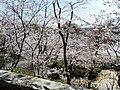 宇部市護国神社 - panoramio (2).jpg