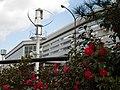 寝屋川市駅前のサザンカの花 Sasanqua 2013.2.13 - panoramio.jpg