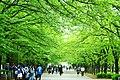 小瀬の新緑 - panoramio.jpg