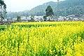 广州最美乡村—红山村 - panoramio (13).jpg