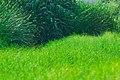 惠州巽寮湾 - panoramio (10).jpg