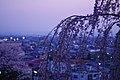 烏帽子山公園の桜と赤湯温泉街 Cherry Flower ^ Akayu Hot Spring Town - panoramio.jpg