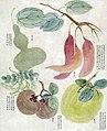 番薯、香員、番柿、葫蘆、灣豆.jpg