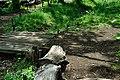 矢川緑地 - panoramio (34).jpg