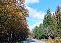 秋のせせらぎ街道 - panoramio.jpg