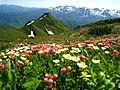 頂きの花畑 - panoramio.jpg