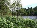 0020. Парголово. Финское озеро.jpg