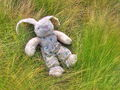 04900 Toy Rabbit.jpg