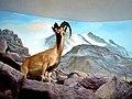 050-Mozeh Tarikh Tabiei نمایی از موزه تاریخ طبیعی شهر قم-کل.jpg
