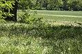 07 LSG 7338 010 Heidewald Wiese mit Schopfigen Traubenhyazinthen im Wald.jpg