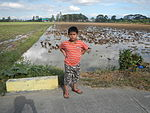 09383jfRoads Paddy fields Domesticated ducks Bahay Pare Center Candaba Pampangafvf 25.JPG