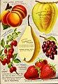 1893 Maule's seed catalogue BHL42541349.jpg