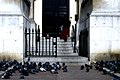 2006-03-12 - London - St Patricks Day - Trafalgar Square - Pigeons (4888168917).jpg