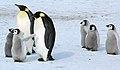 2007 Snow-Hill-Island Luyten-De-Hauwere-Emperor-Penguin-35.jpg