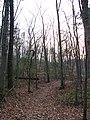 2008 04 06 - Russett - Nature Reserve.JPG