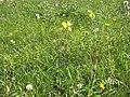 2009-06-17 Flora am Eisenstein (Niederösterreich) 2.jpg