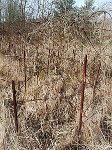 2012-03-13 10-21-43-site-plutons-barbele.jpg