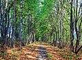 2012 Kocobędz, Ścieżka w lesie (02).jpg