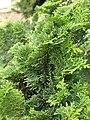 2015-05-27 Paris, Jardin des plantes 17.jpg